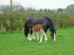 Buttons&Foal2